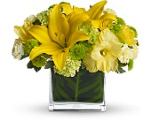 Pot of Gold Flowers for St Patrick's Day