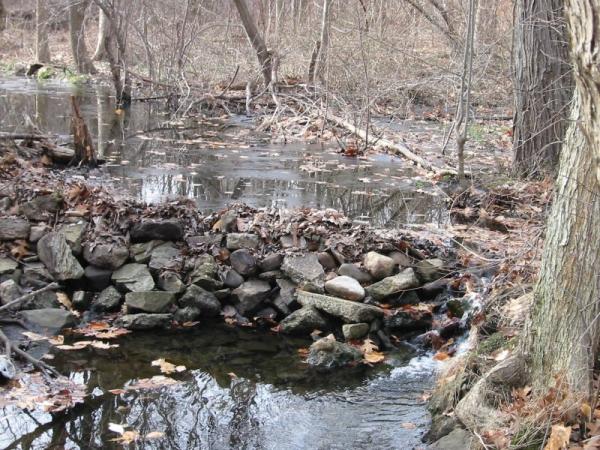 allandale woods in boston resized 600