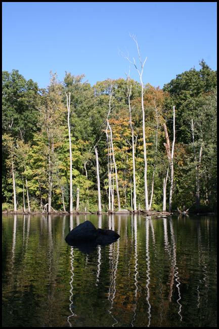 allandale woods in brookline resized 600