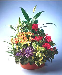 Mattapan Florist
