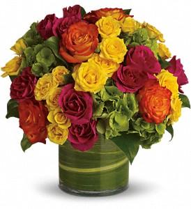 Cambridge Florist