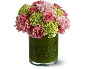 Carnations Boston