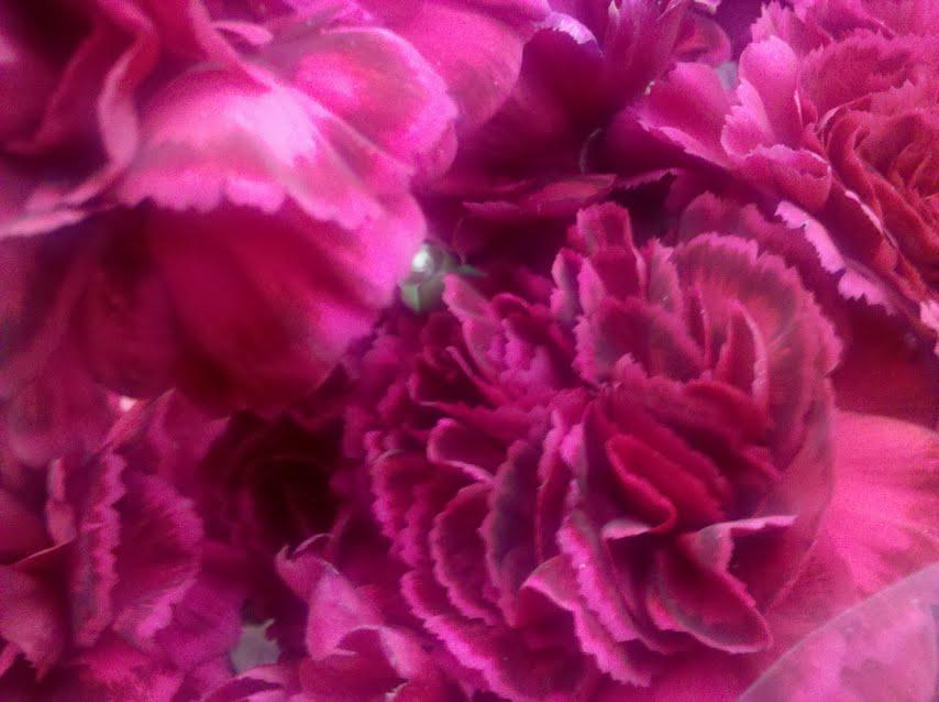 Carnations in Boston