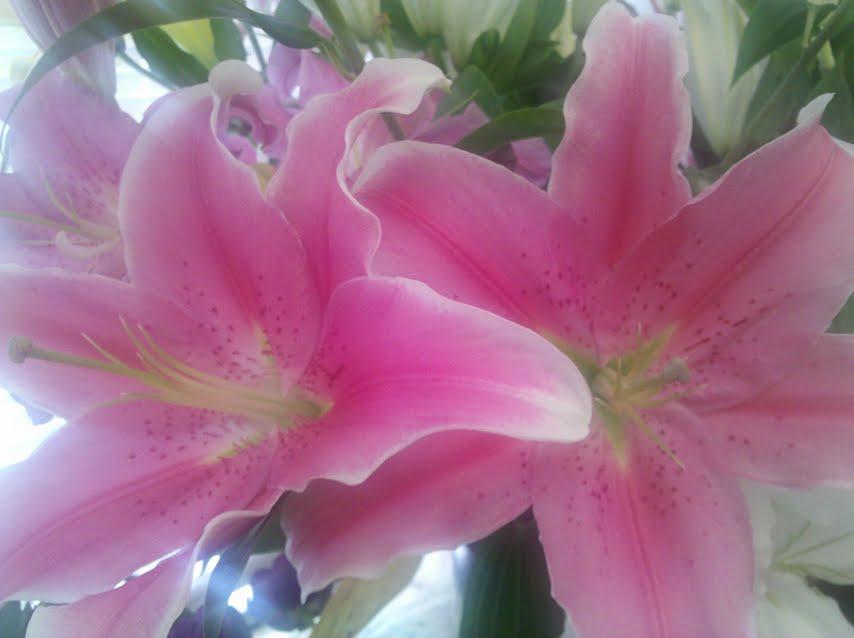 Oriental Lilies in Boston