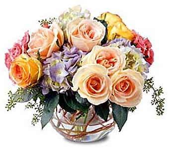 Passover Flowers Newton