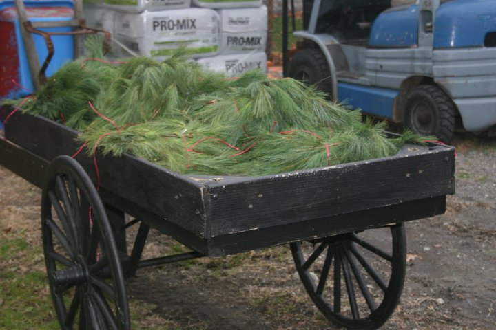 Wagon full of White Pine Roping