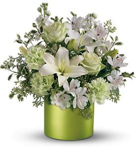 c--users-rickcanale-pictures-st_patricks_flowers.jpg