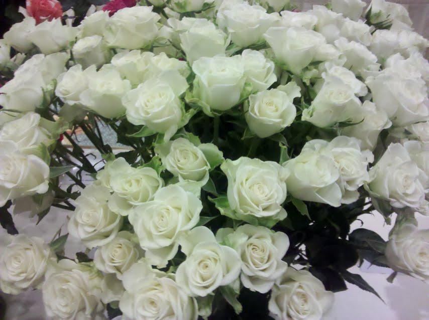 Snowflake Spray Rose
