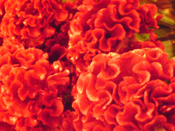 Halloween Party Flowers