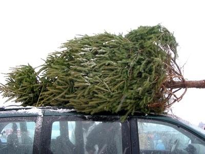 christmas tree car game