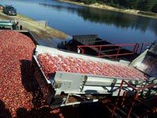cranberry bog resized 600