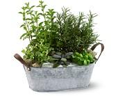 Herb Garden Boston