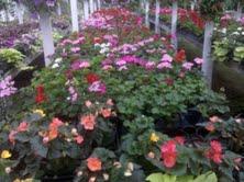 garden center clearance resized 600