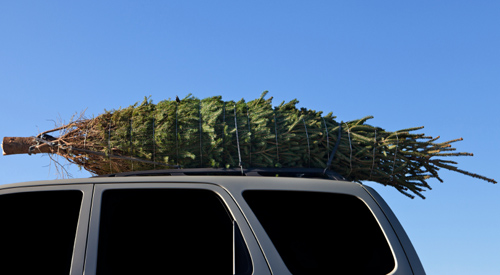 griswold tree resized 600
