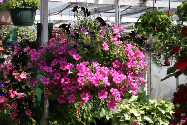 Container gardening in Boston