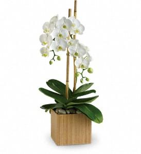 orchid_valentines_boston-resized-600.jpg