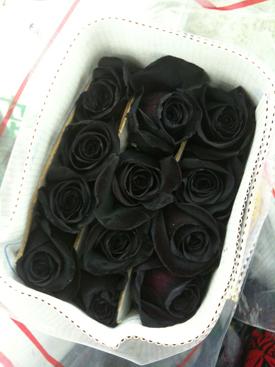 Rose Black Dyed Twilight1 resized 600