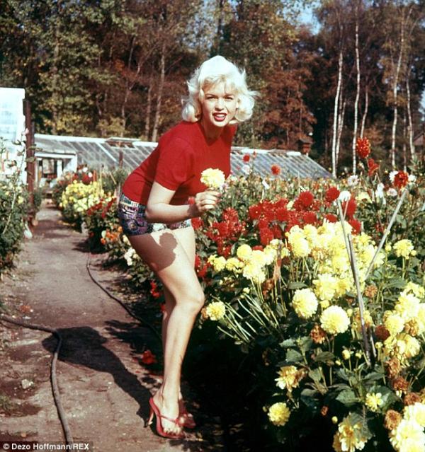 Jayne Mansfield Flowers