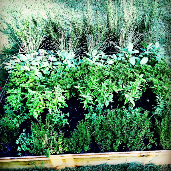 Westwood Herb garden