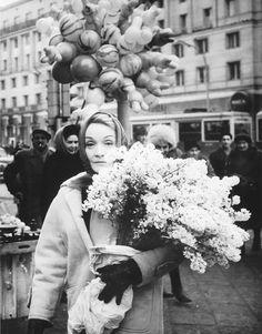 Marlene Dietrich flowers