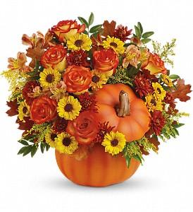fall_flowers_boston