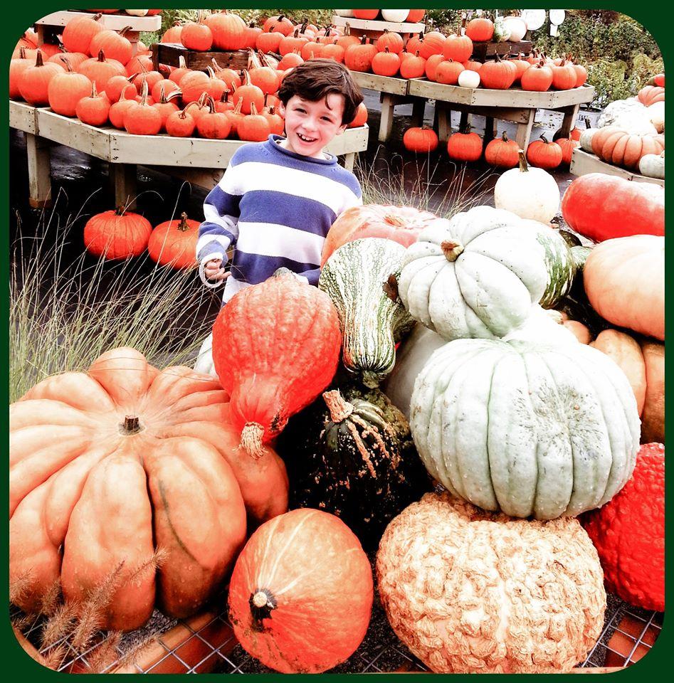 ryan_pumpkins