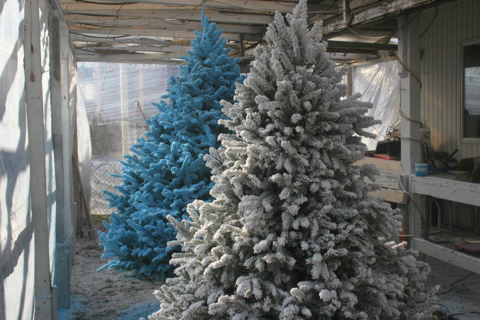 snow_flocked_christmas_tree