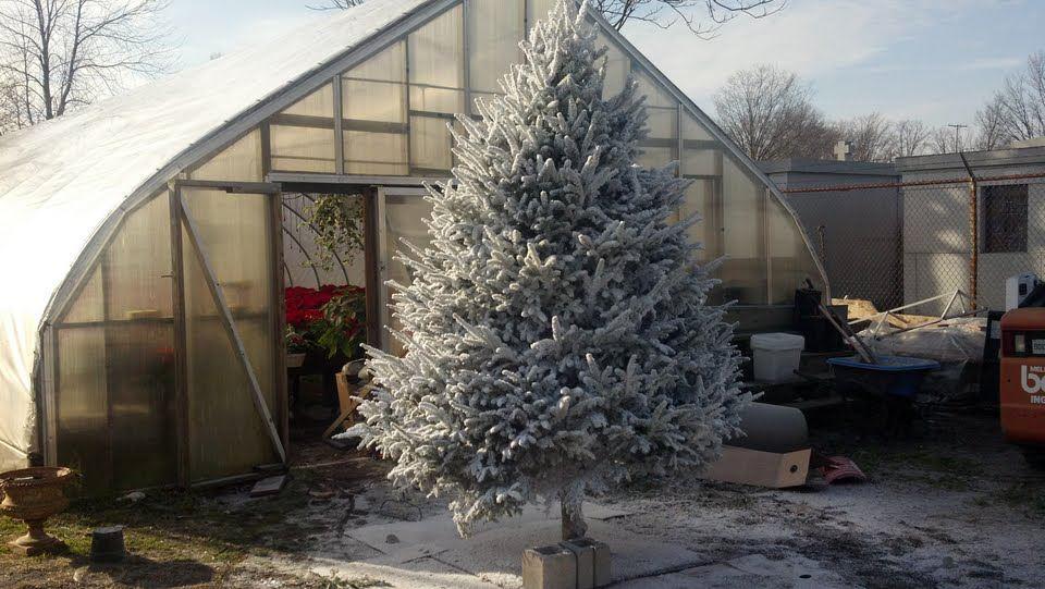 snow_flock_christmas_tree