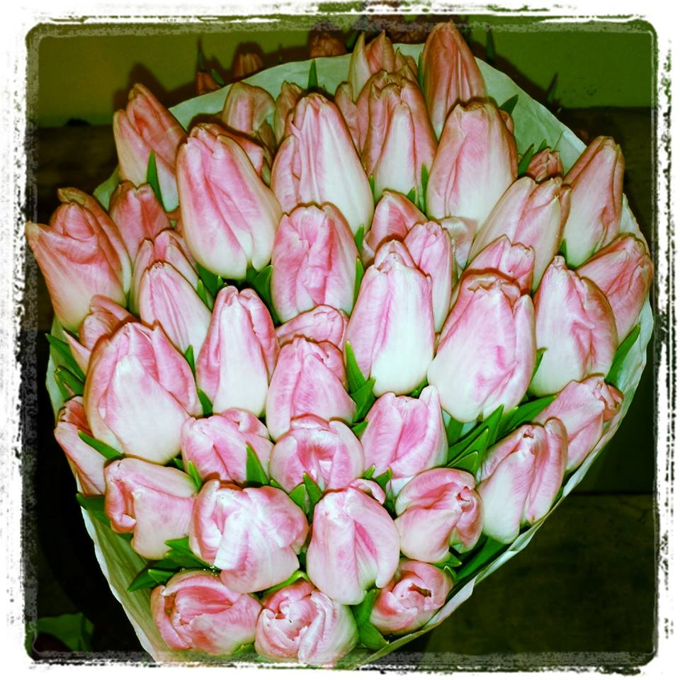 tulips_in_boston
