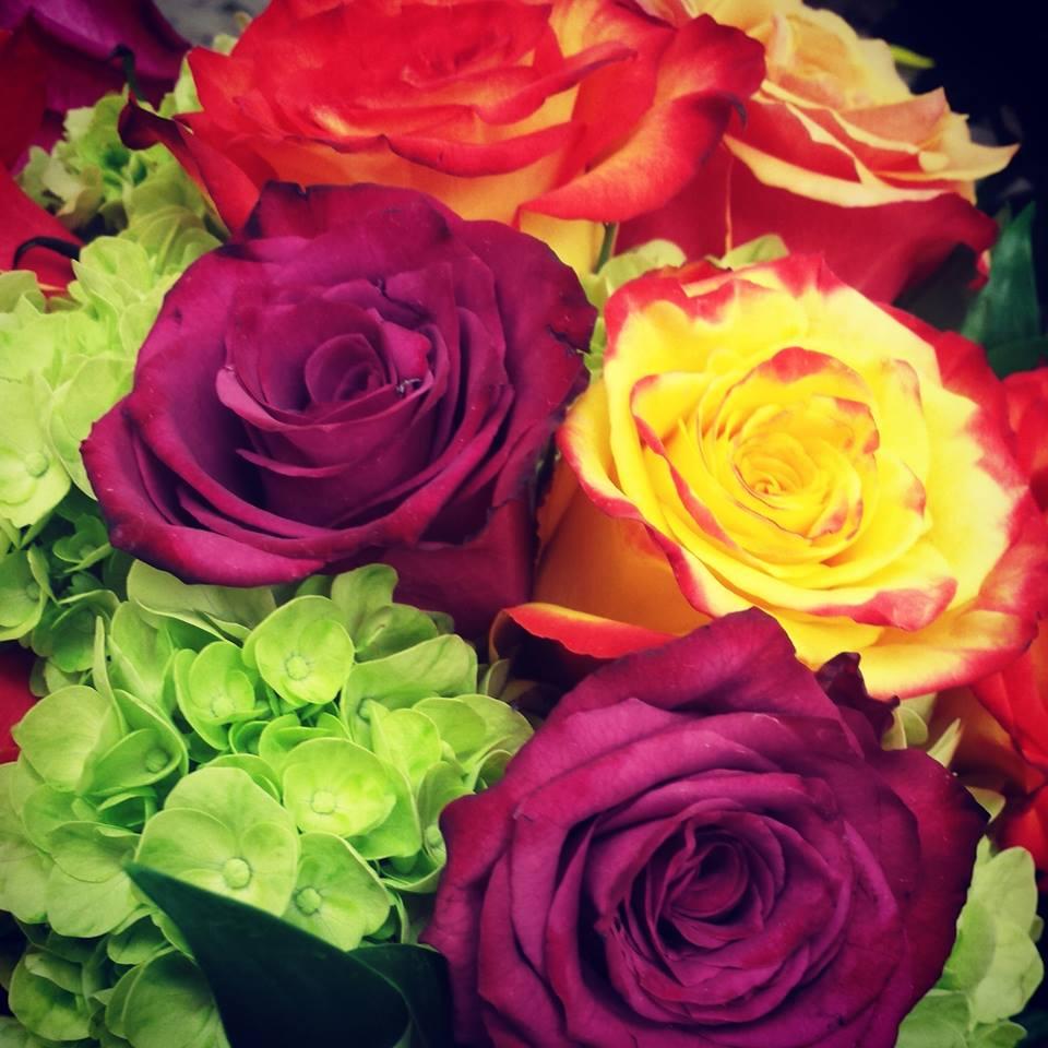 roses_in_boston
