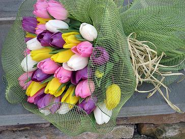 tulips in boston