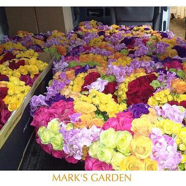 golden_globe_flowers