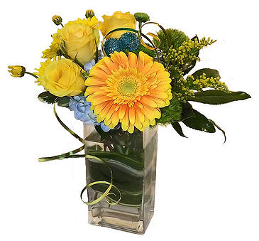 gerber daisies boston
