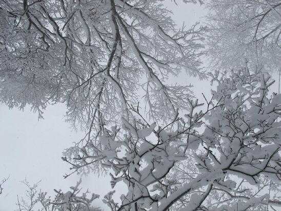 suzie_snow_2