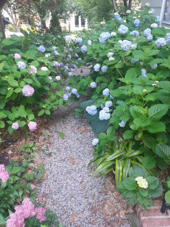 garden path in boston