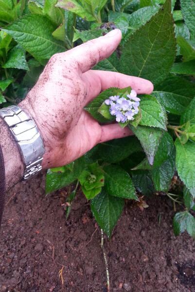 gardening in boston