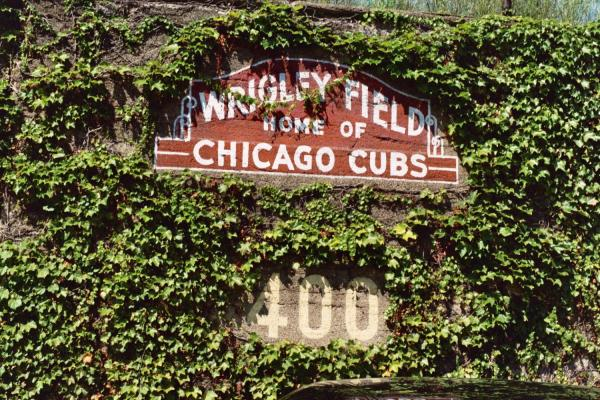 wrigley field ivy chicago cubs resized 600