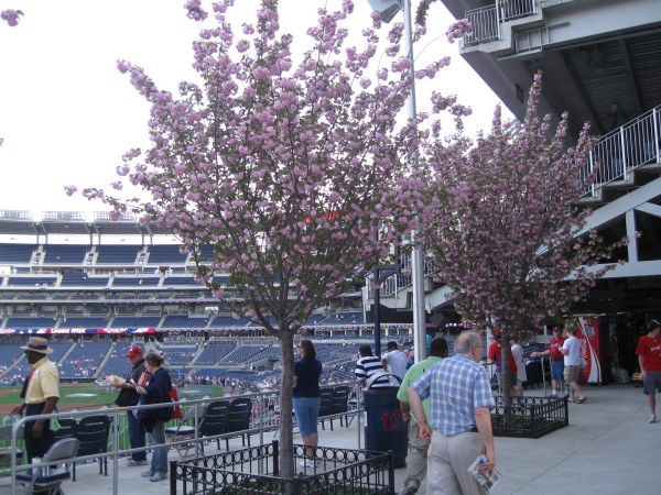 nationals park resized 600