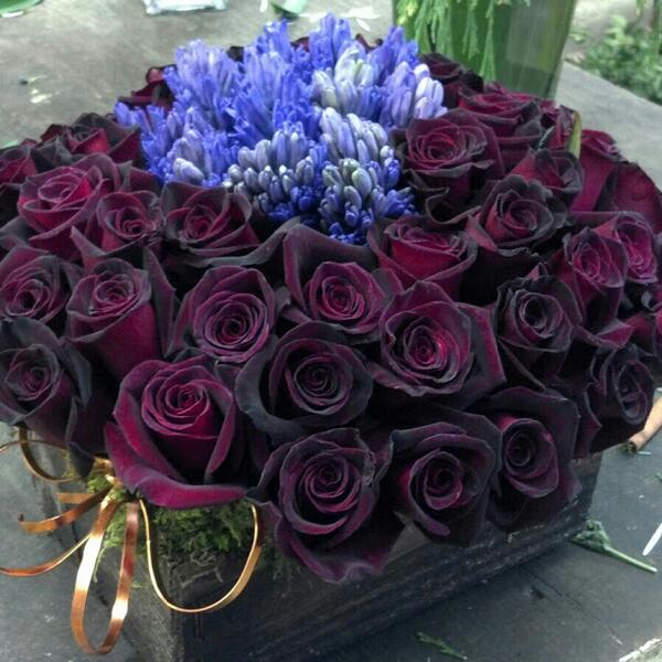 Black Magic roses in Boston