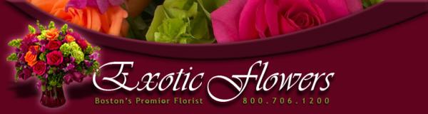 exotic flowers boston resized 600