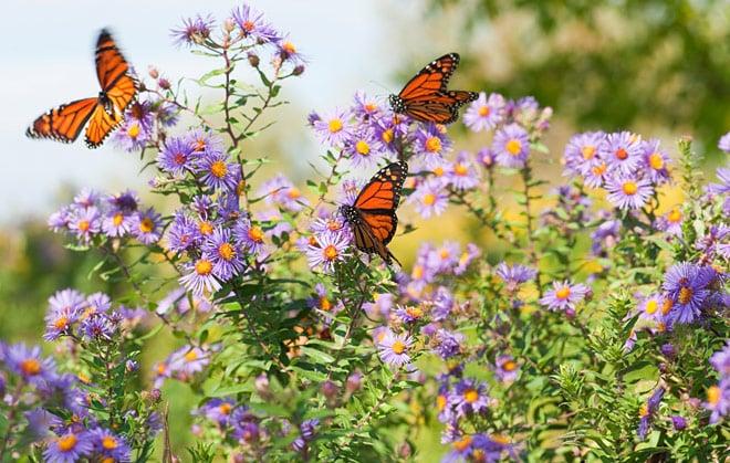 Butterfly-Header.jpg