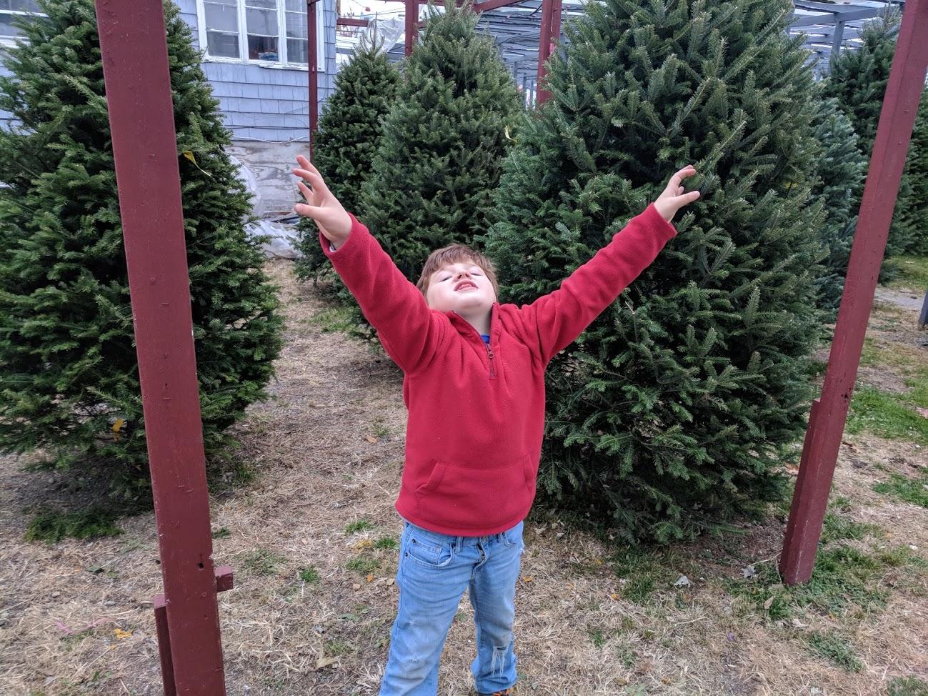 CHRISTMAS TREES BOSTON.jpg