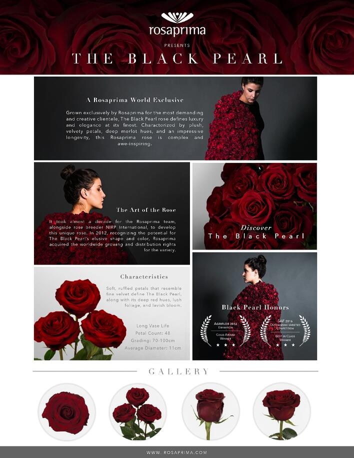 Rosaprima Black Pearl Promo Sheet-page-0.jpg