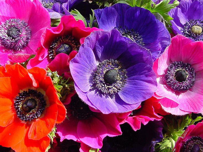anemone_001.jpg