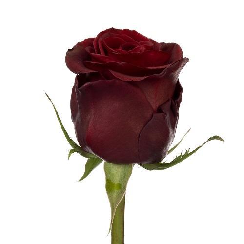 black pearl roses