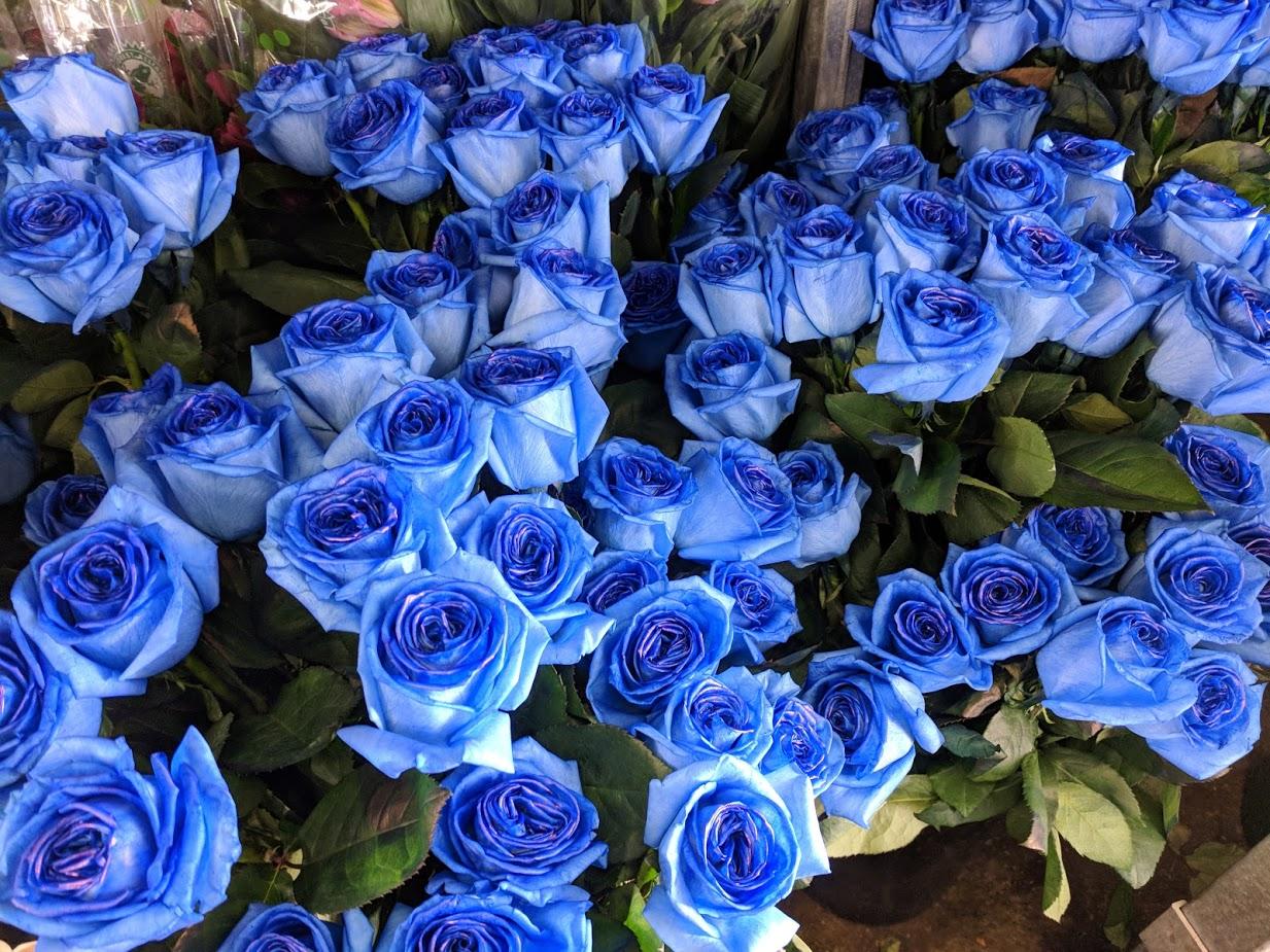 blue roses-1.jpg