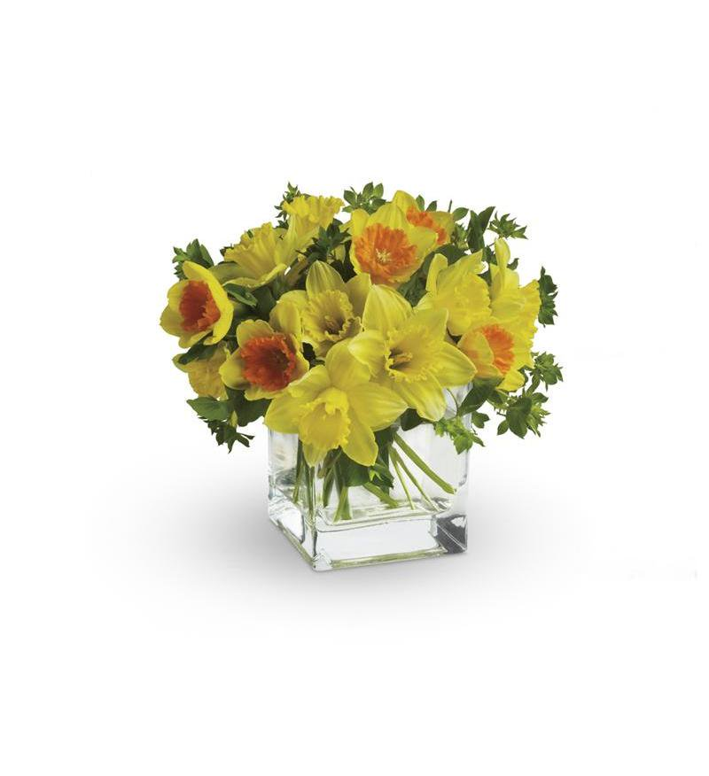 daffodils boston.jpg