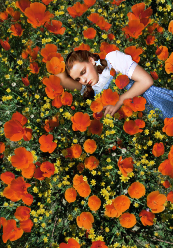 dorothy-in-a-field-of-heroin-poppies.jpg