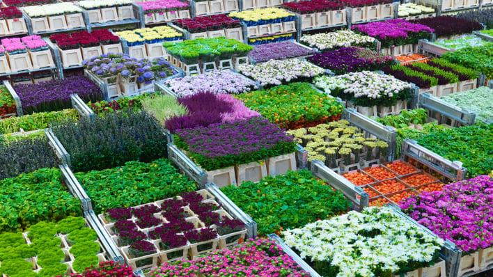 dutch_flower_auction.png