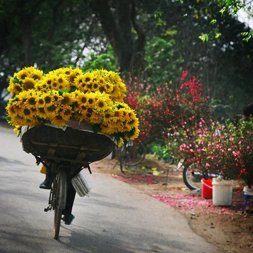 flower_bike.jpg
